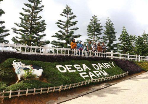 Desa Diary Farm